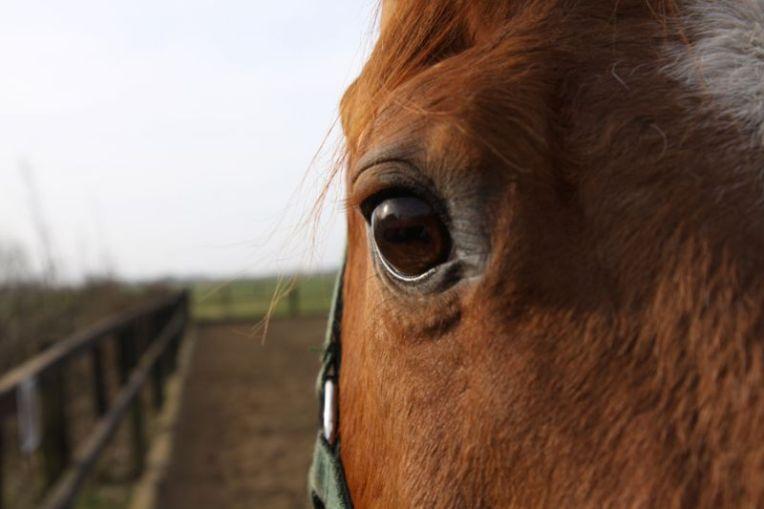 HorseSpirit